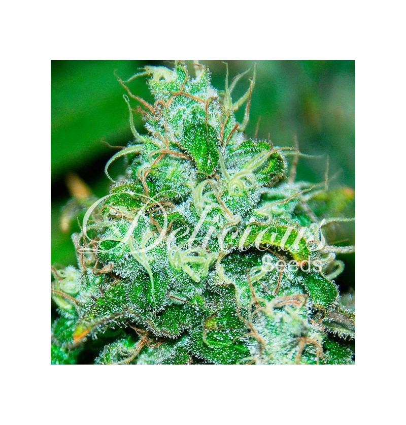 FRUITY CHRONIC JUICE (INDICA LINE) DELICIOUS 5UN