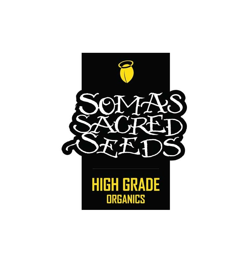 SOMAVI SOMA SEEDS REGULARES 10UN