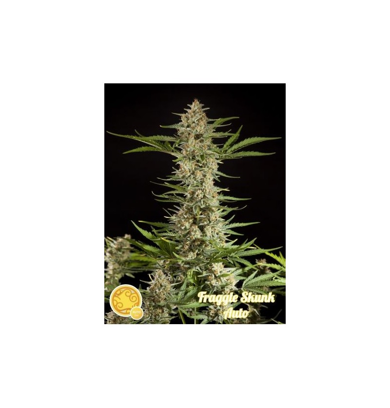 FRAGGLE SKUNK AUTO PHILOSOPHER 25UN