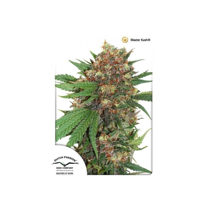 MASTER KUSH DUTCH PASSION 3UN